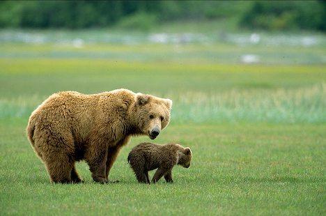 Mama bear and baby bear